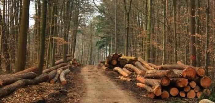 разворовывание леса
