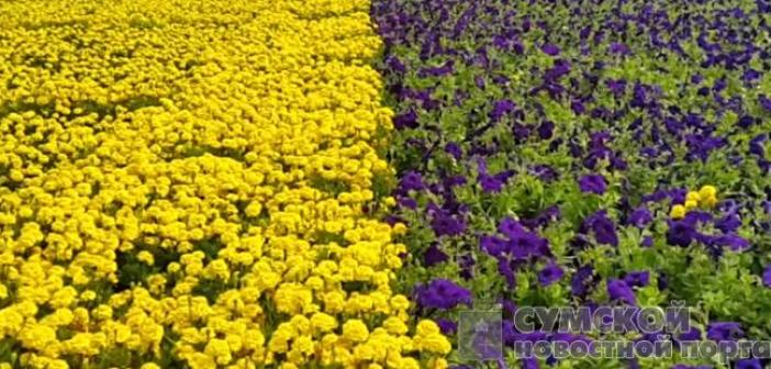 В Украине создали самый большой флаг из цветов