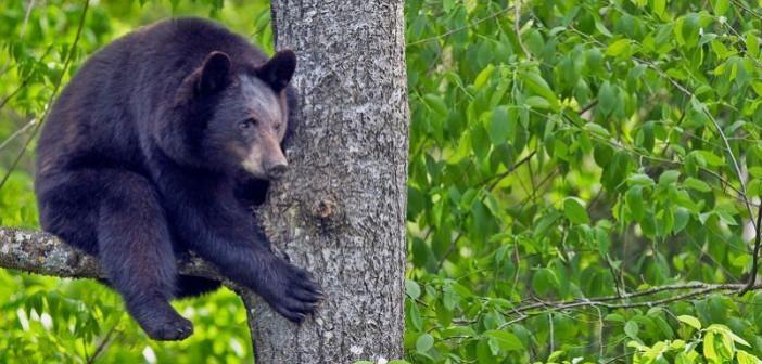 информация коттеджном во фрязино медведь на дереве работы