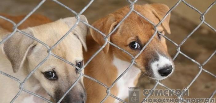 отлов бездомных животных