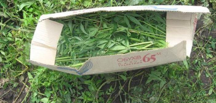 урожай на сумщине