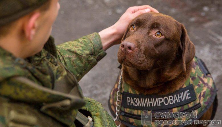 собака-минер