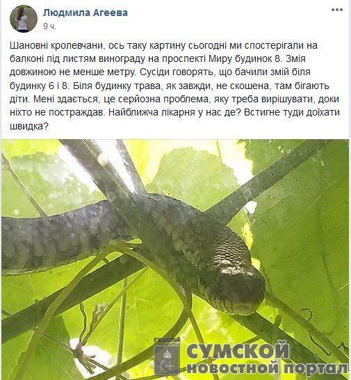 змея-кролевец