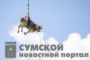 sumy-novosti-korova-v-polete
