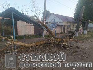sumy-novosti-derevo-upalo-shostka