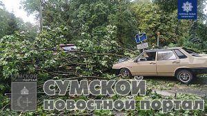 sumy-novosti-devjatka-derevo