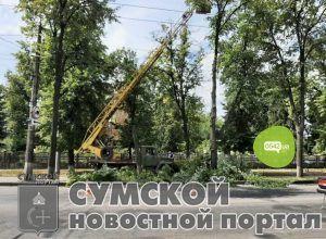 sumy-novosti-lipki-klad
