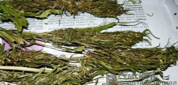 20 кг марихуаны