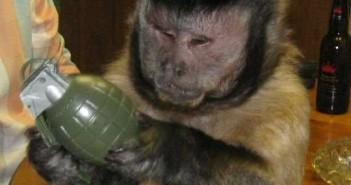 обезьяна-с-гранатой
