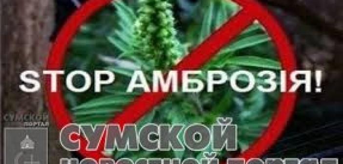 амброзия-стоп