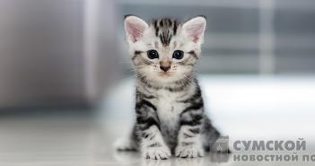 беззащитный-котенок