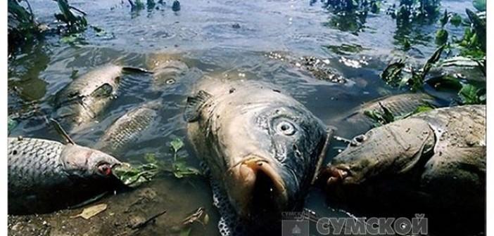 дохлая-рыба