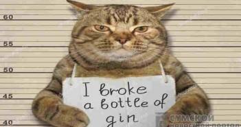 кот-разбил