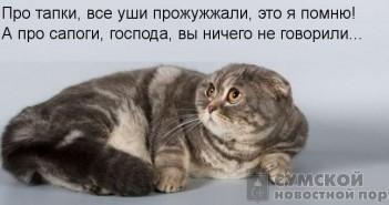 кот-угрожает