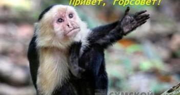 обезьяна капуцин