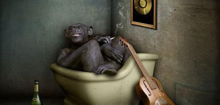 обезьяна-курит