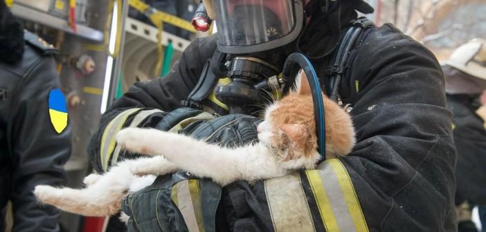 пожарный-с-котом