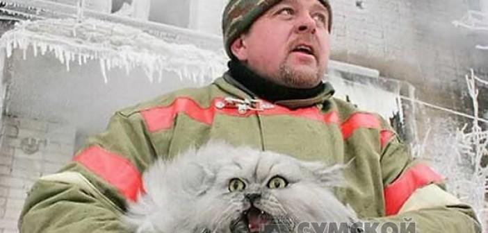 пожарный-кот