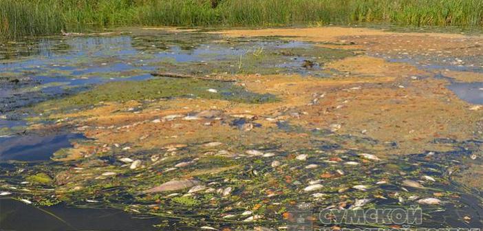 экологическая катастрофа из России