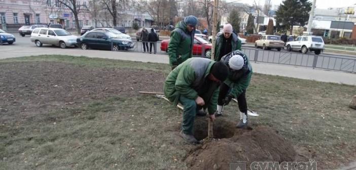 зеленстрой-деревья