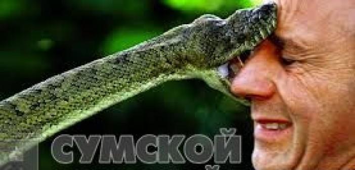 змея-кусает-человека
